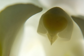 Orchidées blanches0012.jpg